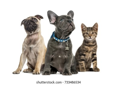 Group of puppies and cat sitting, isolated on white
