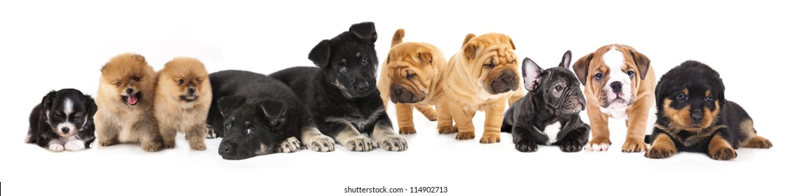 Group Of Puppies Images Stock Photos Vectors Shutterstock