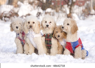 group of puppies in snow