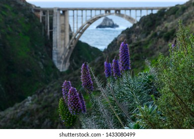 Group of Purple Flowers Blooming Along Cliff in front of highway bridge