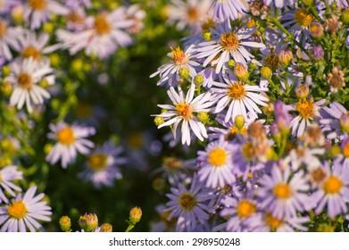 group of purple and orange echinacea flowers