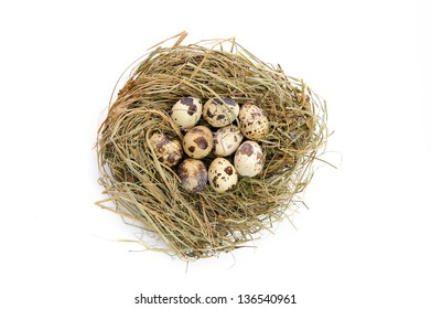 Group of quail spotted eggs in the grassy nest
