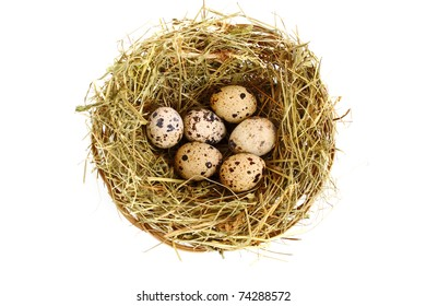 Group of quail spotted eggs in the grassy nest isolated on white