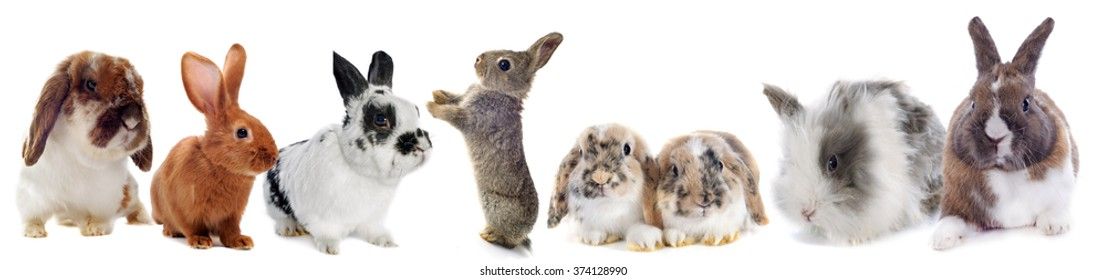 group of Rabbits  in front of white background