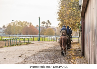 A group of racehorses heading to the gallops at Warren Hill in Newmarket, England.