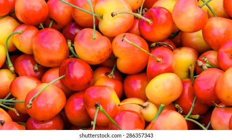 Group of Rainier cherries at Puyallup Farmer Market, Puyallup, Washington, USA. Rainiers are sweet cherries with a thin skin and thick creamy-yellow flesh. Panoramic style.