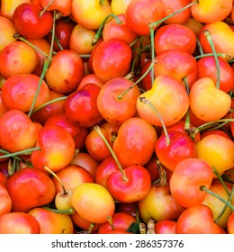 Group of Rainier cherries at Puyallup Farmer Market, Puyallup, Washington, USA. Rainiers are sweet cherries with a thin skin and thick creamy-yellow flesh.