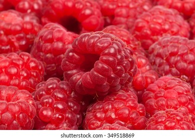 Group of raspberries on red background. Studio shoot.