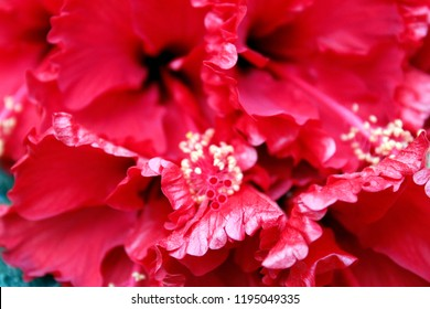 Group of Red flowers.Dekstop Walpaper Photo.Flower of beauty. walpaper and background.