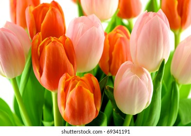 A group of red and pink tulips on a white background