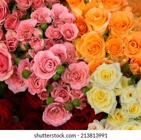 Group of red, pink, yellow and orange roses