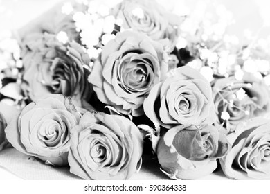 Group of red roses on white isolated.