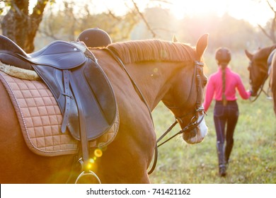 Group of rider girls walking with horses in park. Equestrian recreation activities background with copy space
