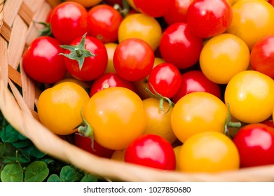 A group of ripe red and yellow cherry tomatoes in a wicker basket on grass
