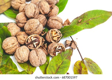 Group of ripe walnuts lie on top of the leaves on a white background.