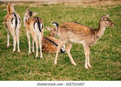 Herbivore Animals Coloring Pages : Herbivore eating images stock photos vectors shutterstock