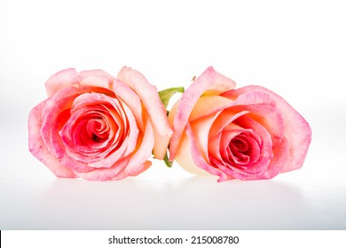 group of rose isolated on white background