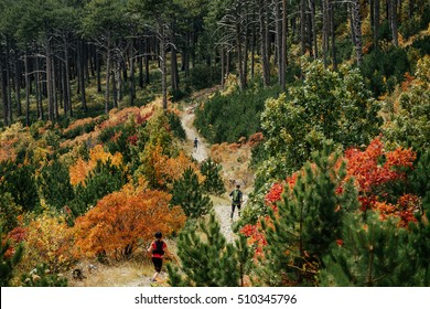 group runners run descend from mountain during a sports race. autumn forest, yellow and red leaves on trees