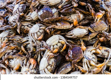 The group of Salted crab or pickled crab