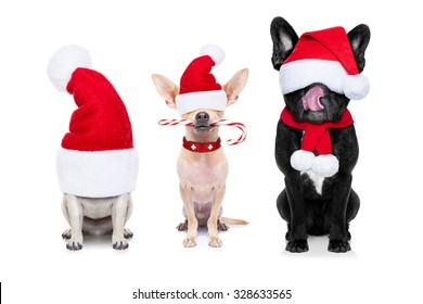 group of santa claus dogs, for christmas holidays, eyes covered by the hat , isolated on white background