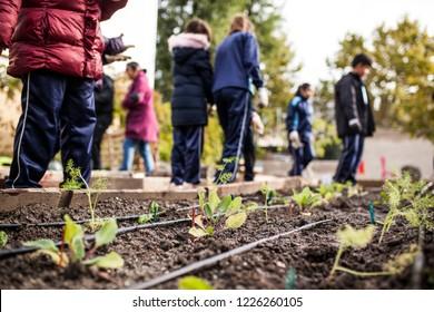 group of schoolchildren working in the school garden