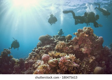 Group of Scuba Divers Underwater at the coral reef.