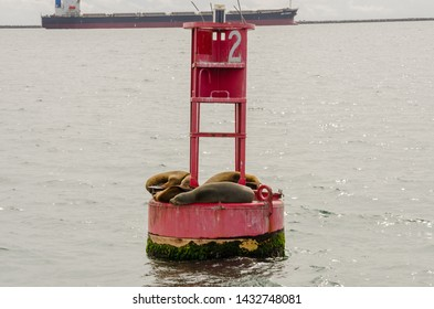 A group of sea lions basks in the warmth of the California sun on a red buoy