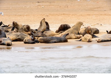 Group of the Sea lions on the coast of the Atlantic Ocean, Namibia