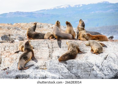 Group of the sea lions on the rock, Beagle Channel