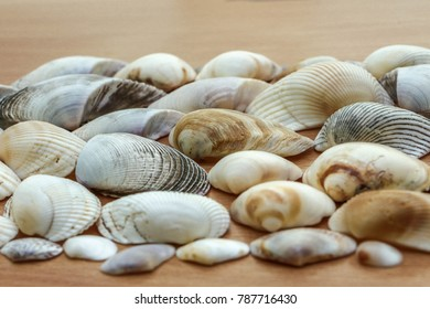 Group of sea shells with various size and color arranged in a brown wooden table