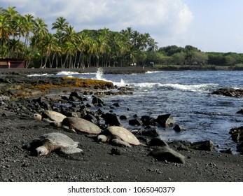 Group of sea turtles on beautiful Hawaiian black sand beach
