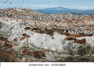 group of sea wolves and cormorants over a rock with mountains in the background
