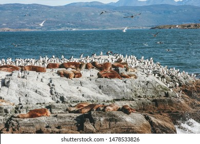 Group of sea wolves and cormorants over a rock with the sea and mountains in the background