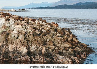 group of sea wolves over a rock with sea and mountains in the background