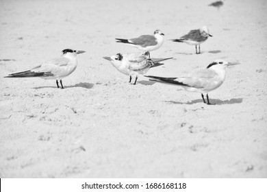 A group of seabirds standing on the sand