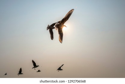 Group of seagulls in flight