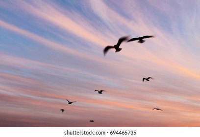 A group of seagulls flying in a colorful sky at sunset