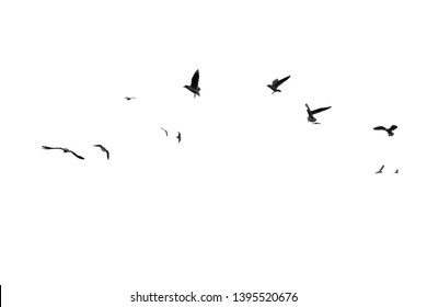 group of seagulls flying on white background