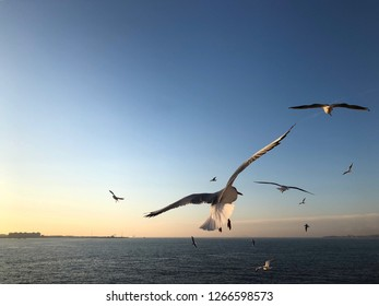 group of seagulls flying over sea before sunset
