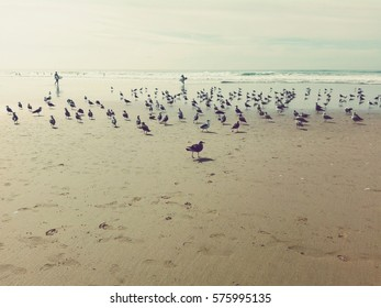 Group of seagulls on the beach next to the ocean with surfers on the background