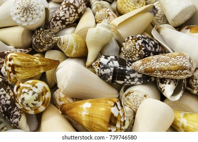 Group of seashells. Seashell collection. Natural backgrounds and textures.