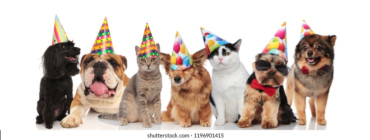 group of seven adorable cats and dogs on birthday party sitting and lying on white background