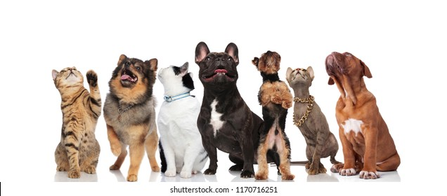 group of seven cute and curious pets looking up while standing and sitting on white background