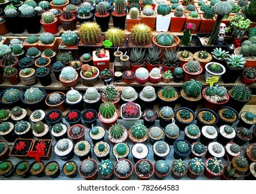 Group of several types colorful cactus, taken from top view