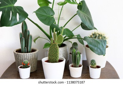 Group of several, various Monstera and cactus plants on a wooden table in front of a white wall.