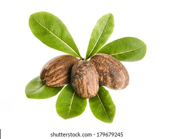 group of shea nuts with leaves on white background