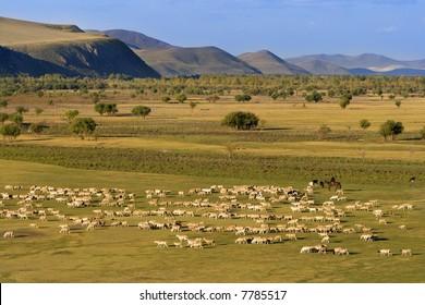 A group of sheep passing through a grassland.