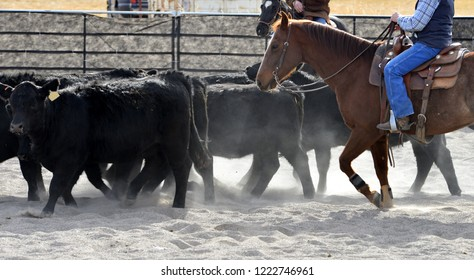 Group of Simmental cattle being sorted by a cutting horse and rider.