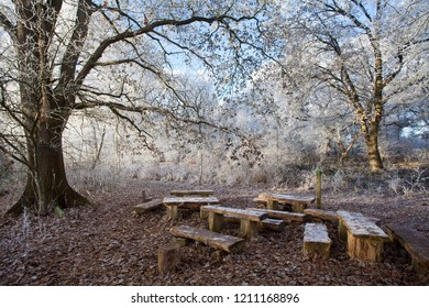 a group of simple wooden benches in natural style stand under a big leafless oak tree with hoar frost in a forest