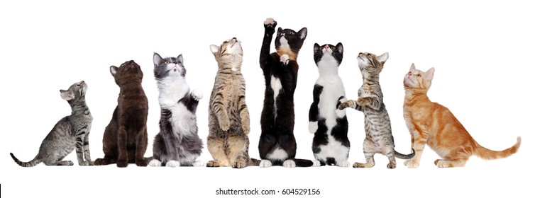 Group of sitting cats of different breeds looking up to the copy space area